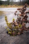 Plants growing in middle of the road Stock Photo - Premium Royalty-Freenull, Code: 698-06616113