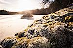 Tranquil view of white flowers growing by lake Stock Photo - Premium Royalty-Free, Artist: Ikon Images, Code: 698-06616131
