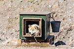 Inuit village, sled dog house, Ittoqqortoormiit, Scoresbysund, Northeast Greenland, Polar Regions Stock Photo - Premium Rights-Managed, Artist: Robert Harding Images, Code: 841-06616295