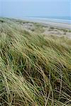 Curracloe beach, County Wexford, Leinster, Republic of Ireland (Eire), Europe Stock Photo - Premium Rights-Managed, Artist: Robert Harding Images, Code: 841-06616595