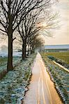 The Oude Trambaan (old tramway) tree lined cycle path in winter, Rijsbergen, North Brabant, The Netherlands (Holland), Europe Stock Photo - Premium Rights-Managed, Artist: Robert Harding Images, Code: 841-06617150