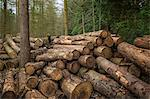 Pile of cut logs in forest Stock Photo - Premium Royalty-Free, Artist: CulturaRM, Code: 649-06622636