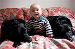 Baby sitting with dogs on sofa Stock Photo - Premium Royalty-Free, Artist: Blend Images, Code: 649-06623016