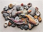 Stones and crab claws on paper Stock Photo - Premium Royalty-Free, Artist: Robert Harding Images, Code: 614-06623458