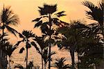 Silhouette of palm trees at sunset Stock Photo - Premium Royalty-Free, Artist: Robert Harding Images, Code: 614-06624435