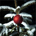 Christmas ornament on snowy tree Stock Photo - Premium Royalty-Free, Artist: Blend Images, Code: 614-06624520