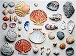Seashells arranged on paper Stock Photo - Premium Royalty-Free, Artist: Cultura RM, Code: 614-06624862