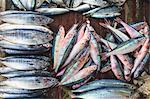 Fresh fish for sale in market Stock Photo - Premium Royalty-Free, Artist: Aflo Relax, Code: 614-06624912