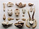 Dried boned arranged on paper Stock Photo - Premium Royalty-Free, Artist: Science Faction, Code: 614-06624915