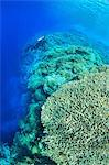 Diver swimming in coral reef Stock Photo - Premium Royalty-Free, Artist: Robert Harding Images, Code: 614-06624945