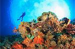 Diver swimming in coral reef Stock Photo - Premium Royalty-Free, Artist: Science Faction, Code: 614-06624964
