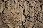 Close up of cracked dry mud Stock Photo - Premium Royalty-Free, Artist: Robert Harding Images, Code: 614-06625198