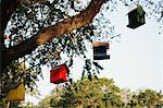 Birdhouses hanging from tree Stock Photo - Premium Royalty-Free, Artist: David & Micha Sheldon, Code: 614-06625382