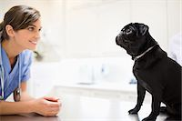 pvg - Veterinarian greeting dog in vet's surgery Stock Photo - Premium Royalty-Freenull, Code: 6113-06626426