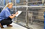 Vet checking dogs in kennel Stock Photo - Premium Royalty-Free, Artist: ableimages, Code: 6113-06626446