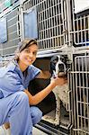 Smiling vet placing dog in kennel Stock Photo - Premium Royalty-Free, Artist: ableimages, Code: 6113-06626509