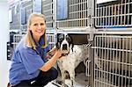 Vet placing dog in kennel Stock Photo - Premium Royalty-Free, Artist: ableimages, Code: 6113-06626521