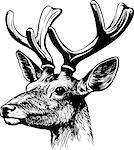 Red deer's head Stock Photo - Royalty-Free, Artist: Denis_Barbulat                , Code: 400-06629977