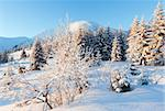 Winter mountain landscape with snow covered trees in first morning  sunbeams Stock Photo - Royalty-Free, Artist: Yuriy                         , Code: 400-06633508