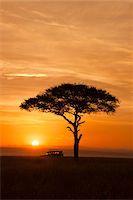 remote car - View of acacia tree and safari jeep silhouetted against beautiful sunrise sky, Maasai Mara National Reserve, Kenya, Africa. Stock Photo - Premium Rights-Managednull, Code: 700-06645853