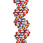 DNA (deoxyribonucleic acid), molecular model. Stock Photo - Premium Royalty-Free, Artist: Science Faction, Code: 679-06673634