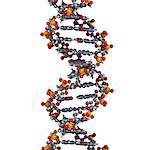DNA (deoxyribonucleic acid), molecular model. Stock Photo - Premium Royalty-Free, Artist: I Dream Stock, Code: 679-06673638
