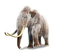 prehistoric - Woolly mammoth (Mammuthus primigenius), computer artwork. Stock Photo - Premium Royalty-Freenull, Code: 679-06673959