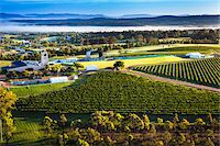 Aerial view of wine country near Pokolbin, Hunter Valley, New South Wales, Australia Stock Photo - Premium Rights-Managednull, Code: 700-06675097