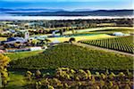 Aerial view of wine country near Pokolbin, Hunter Valley, New South Wales, Australia Stock Photo - Premium Rights-Managed, Artist: R. Ian Lloyd, Code: 700-06675097