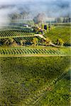 Aerial view of vineyard in wine country near Pokolbin, Hunter Valley, New South Wales, Australia Stock Photo - Premium Rights-Managed, Artist: R. Ian Lloyd, Code: 700-06675103