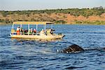 Elephant walking through Chobe River, Chobe National Park,  near the town of Kasane, Botswana, Southern, Africa, Stock Photo - Premium Rights-Managed, Artist: AWL Images, Code: 862-06675646