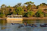 Hippos and tour boat, hippopotamus amphibius,Chobe River, Chobe National Park,  near the town of Kasane, Botswana, Southern, Africa, Stock Photo - Premium Rights-Managed, Artist: AWL Images, Code: 862-06675652