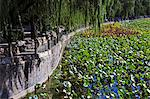 Walk way adjacent to water lillies on Beihai lake near the East Gate of Bei Hai Park Stock Photo - Premium Rights-Managed, Artist: AWL Images, Code: 862-06676147