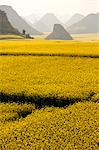 China, Yunnan, Luoping. Mustard fields in bloom amongst the karst outcrops at Luoping. Stock Photo - Premium Rights-Managed, Artist: AWL Images, Code: 862-06676192