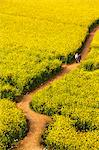 China, Yunnan, Luoping. Chinese tourists enjoying the mustard fields in bloom at Luoping. Stock Photo - Premium Rights-Managed, Artist: AWL Images, Code: 862-06676195
