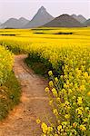 China, Yunnan, Luoping. Mustard fields in blossom amongst the karst hills of Luoping. Stock Photo - Premium Rights-Managed, Artist: AWL Images, Code: 862-06676222