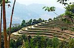 China, Yunnan, Yuanyang. Rice terracing in Yuanyang. Stock Photo - Premium Rights-Managed, Artist: AWL Images, Code: 862-06676300