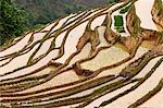 China, Yunnan, Yuanyang. Rice terracing in Yuanyang. Stock Photo - Premium Rights-Managed, Artist: AWL Images, Code: 862-06676304