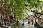 China, Yunnan, Kunming. A cool, leafy avenue in Kunming. Stock Photo - Premium Rights-Managed, Artist: AWL Images, Code: 862-06676354
