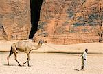 Chad, Wadi Archei, Ennedi, Sahara.  A young boy leads a camel on a rope. Stock Photo - Premium Rights-Managed, Artist: AWL Images, Code: 862-06676516