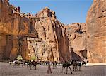 Chad, Wadi Archei, Ennedi, Sahara.  A herd of camels in Wadi Archei. Stock Photo - Premium Rights-Managed, Artist: AWL Images, Code: 862-06676517