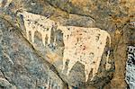 Chad, Wadi Archei, Ennedi, Sahara.  An ancient painting of two white bulls on the wall of a cave. Stock Photo - Premium Rights-Managed, Artist: AWL Images, Code: 862-06676526