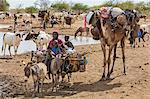 Chad, Mongo, Guera, Sahel.  A Chadian Arab Nomad woman and her children move from a waterhole with their possessions. Stock Photo - Premium Rights-Managed, Artist: AWL Images, Code: 862-06676546