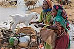 Chad, Mongo, Guera, Sahel.  Chadian Arab Nomad women re-load their donkey after collecting water from a waterhole. Stock Photo - Premium Rights-Managed, Artist: AWL Images, Code: 862-06676547