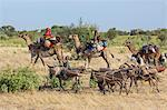 Chad, Arboutchatak, Guera, Sahel. Peul nomads on the move. Stock Photo - Premium Rights-Managed, Artist: AWL Images, Code: 862-06676555