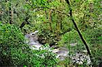 Central America, Costa Rica, Stream in the ungle Stock Photo - Premium Rights-Managed, Artist: AWL Images, Code: 862-06676558