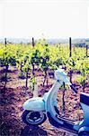 Italy, Umbria, Perugia district, Montefalco. Vespa scooter in Vineyard. Stock Photo - Premium Rights-Managed, Artist: AWL Images, Code: 862-06677147