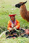 South America, Peru, Cusco. A Quechua woman with a llama in traditional dress   wearing a montera hat, a pollera skirt made from bayeta weave wear, with a Keperina carrying cloth on the ground next to her near the UNESCO World Heritage listed former Inca capital of Cusco Stock Photo - Premium Rights-Managed, Artist: AWL Images, Code: 862-06677266