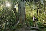 Woman hiker standing in Forest at Cape Alava, Olympic National Park, Clallam County, Washington, USA Stock Photo - Premium Rights-Managed, Artist: AWL Images, Code: 862-06677627