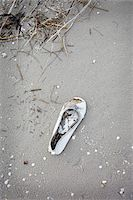 Single Lost Shoe on Beach Stock Photo - Premium Rights-Managednull, Code: 700-06679352